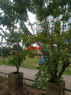 Lake view, baby park side appt. good for living great for kids. এর ছবি
