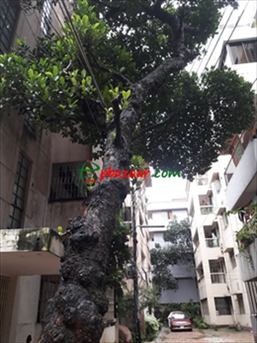Picture of 5 Storied Full Building for sell At Purbo Nakhal Para