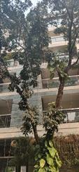 3000 sft Apartment  Foe Rent At Mohakhali DOHS এর ছবি
