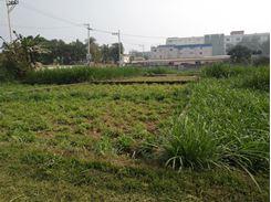 Picture of Land For Sale (Birulia- Akran Road)